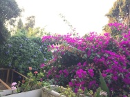Julaine's Yard